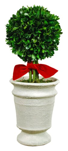 Galt International Naturally Preserved Real Boxwood Ball Topiary Plant with Red Ribbon and Restoration Style Pot, 13-Inch