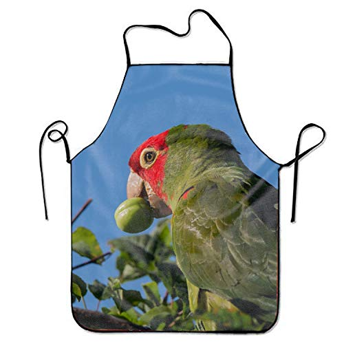 aportt Unisex Waterproof Aprons Cherry Headed Conure Eating Kitchen Apron with Adjustable Strap for Cooking Gardening