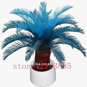 100 piezas / azul semillas de Cycas bolsa, sagú palmera seeds.bonsai semillas de flores, la tasa de 97% planta en maceta rara en ciernes para el jardín de su casa SVI