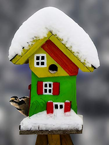 - Home Comforts Laminated Poster Snow Cold Food Woodpecker Aviary Winter Bird Vivid Imagery Poster Print 24 x 36