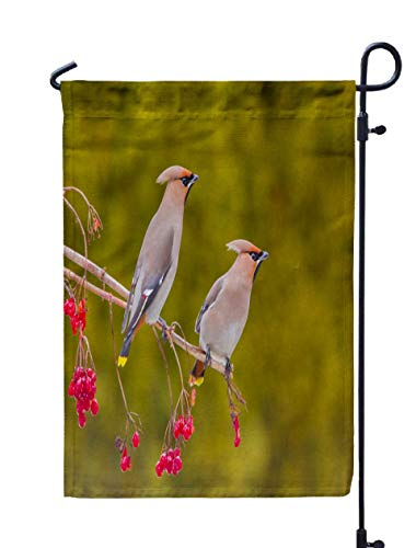 Shorping Decorative Outdoor Garden Flag, 12x18Inch Bohemian Feeding on Berries in Winter Time Bombycilla Garrulus A for Holiday and Seasonal Double-Sided Printing Yards -