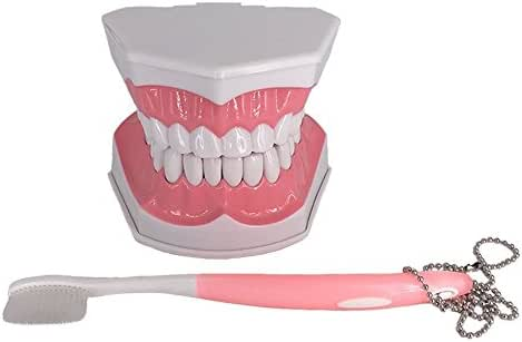 Large Dental Teeth Model Tooth Study Tools with Removable Lower Teeth for Kids Oral Care Teaching