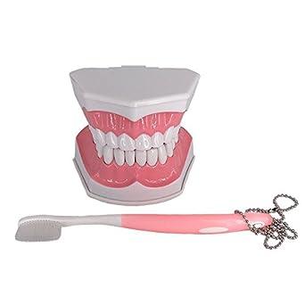 Grandes herramientas de Dental Dientes Estudio Dientes Modelo con inferior extraíble dientes paciente y cepillo de dientes para Kids cuidado Oral Enseñanza: ...