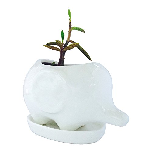 Cute White Ceramic Elephant Pot with Saucer Tray- Ideal for Small Succulent - Home & Office Decor Accent (Baby Elephant, White)