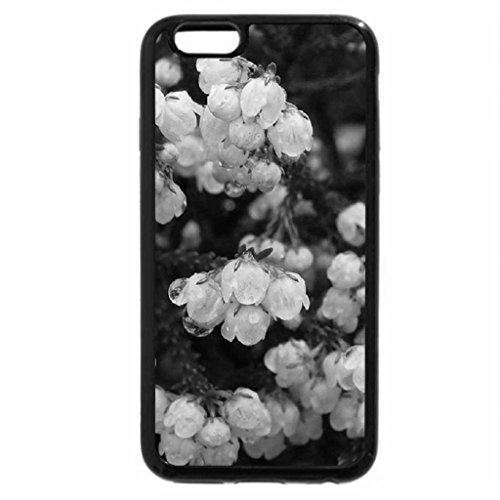 iPhone 6S Case, iPhone 6 Case (Black & White) - ERICA CAPENSIS FLOWER..#2