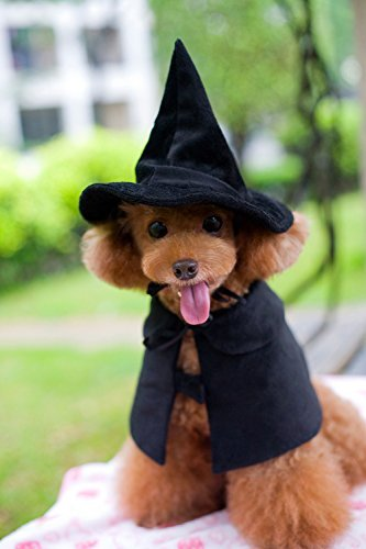 Lanyar Hooded Cloak Witch/Wizard Costume for Medium Pets, Dog Halloween Costume -