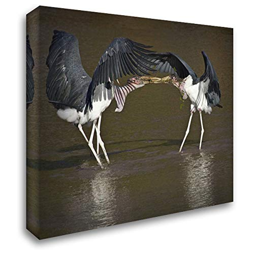 Kenya Marabou Storks with Nesting Material 34x28 Gallery Wrapped Stretched Canvas Art by Williams, Joanne ()