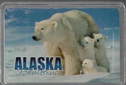 Amazon.com: Alaska oso polar estándar juego de cartas (en ...