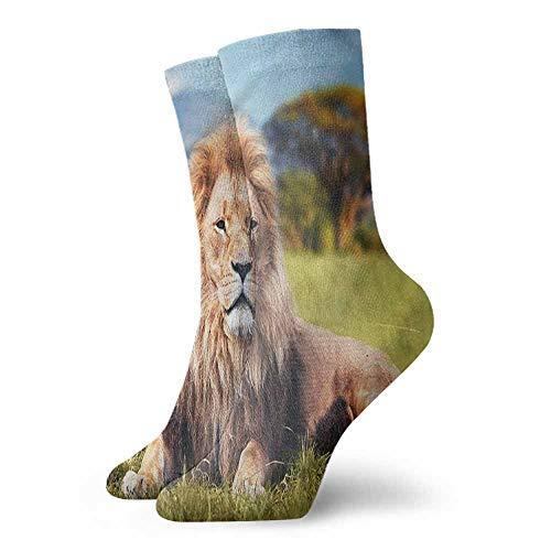 - Patterned Socks Lion Beast Lying on Savannah Grass Hiker Boot Sock