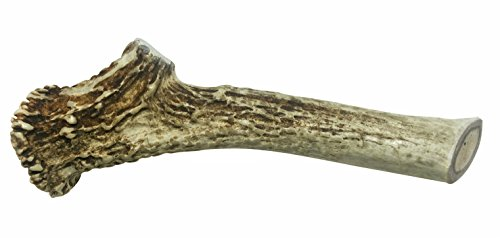 WhiteTail Naturals | Extra Large Premium Deer Antler for Dogs | All Natural XL Antler Chew (7