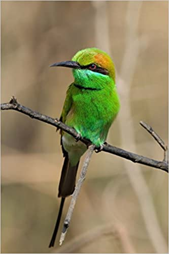 Book Green Bee-Eater (Merops Orientalis) Bird Journal: 150 page lined notebook/diary