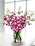 Premium Cut Purple Orchids (20 stems with Vase)
