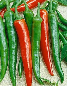 Premier Seeds Direct Pepper Hot Scorpion F1 includes 25 Seeds PEP81