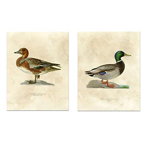 Vintage Nature Print - Antique Ducks - Gallery Wall Decor Art Print 8 x 10 Unframed (Set of 2)]()