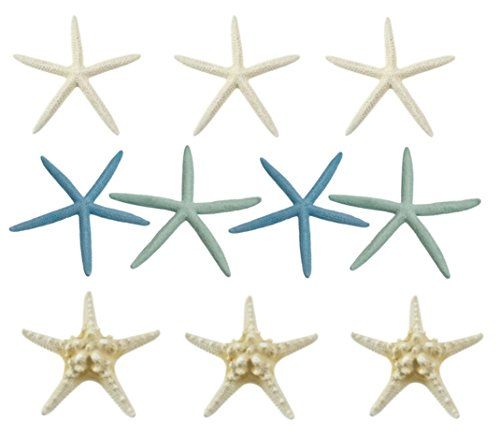 Variety Starfish Mix - 10 Large Pieces 6-8