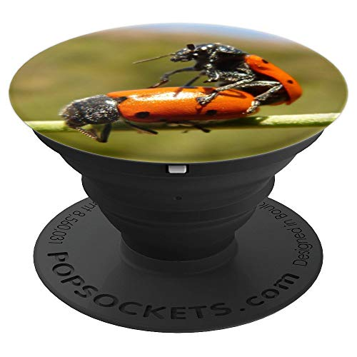 Ladybug Bronco Love - PopSockets Grip and Stand for Phones and Tablets ()