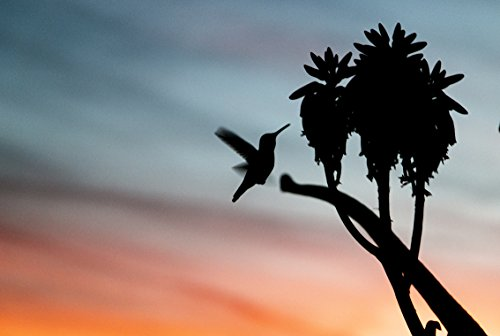Hummingbird And Sunset by