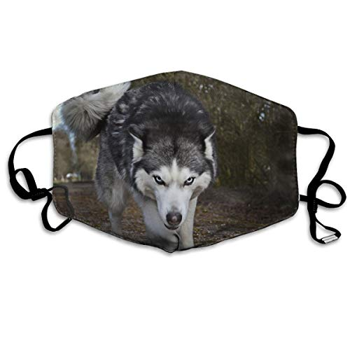Thuth A Fierce Husky Dog Dust-Proof Washable Mask - Reusable Mask - Suitable for Men and Women