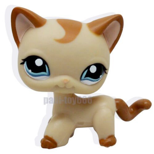 Littlest pet shop shorthair kitten