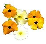 Black Eyed Susan Mix 25 Flower Seeds - Beautiful Thunbergia Alata Susie Mixed Flower Colors, Annual Flower Bloom Summer Plant Seed Pack, Vine Seeds for Planting