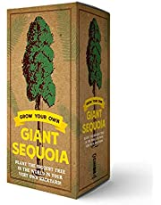 The Grow Your Own Giant Sequoia Kit: Plant the Biggest Tree in the World in Your Very Own Backyard!