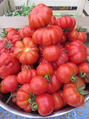 50+ Costoluto Fiorentino Tomato Seeds- Italian Heirloom Variety