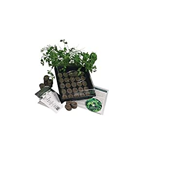Indoor Culinary Herb Garden Starter Kit  Start Growing Fresh Cooking Herbs  U0026 Spices  Great