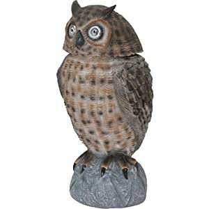 Smart Solar Powered Brown Owl With Lighting Up Eyes U0026 Moving Head