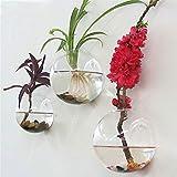 Sfeexun 4 Pcs Wall Hanging Glass Planters 4 Inches Diameter Round Glass Plant Pot - Water Planting Vases Air Flower Vase Plant Terrariums Plant Container (6 Pcs)