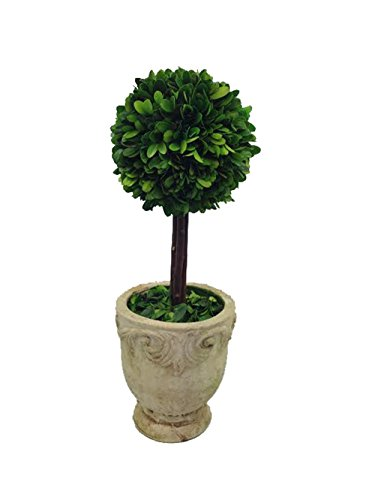 Single Topiary - Flora Decor Preserved Boxwood Single Ball Topiary in Footed Pot -13