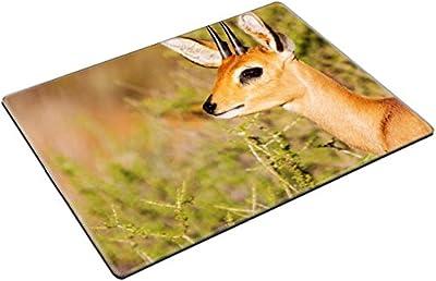 MSD Place Mat Non-Slip Natural Rubber Desk Pads design 21710023 Steenbok standing in scrub in kalahari looking back for danger