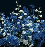 Flower Delphinium Belladonna Mix D1136A (Blue) 25 Seeds by David's Garden Seeds