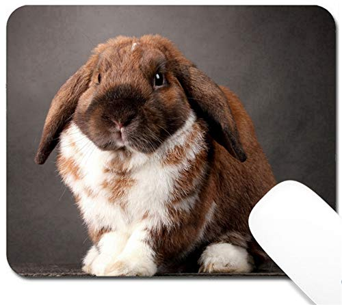 MSD Mouse Pad with Design - Non-Slip Gaming Mouse Pad - Image ID: 12979922 Lop Eared Rabbit on Grey Background