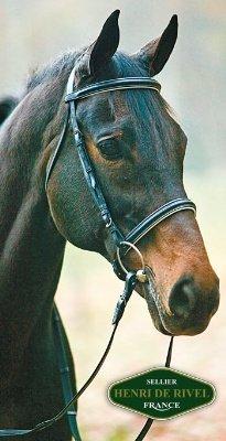 Henri De Rivel Dressage Bridle Horse Black