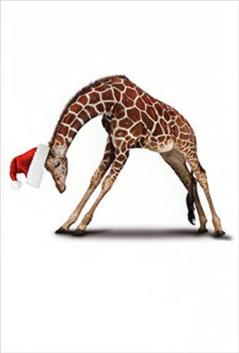 Amazon.com : Zoo Yoga Giraffe Humorous/Funny Nobleworks ...