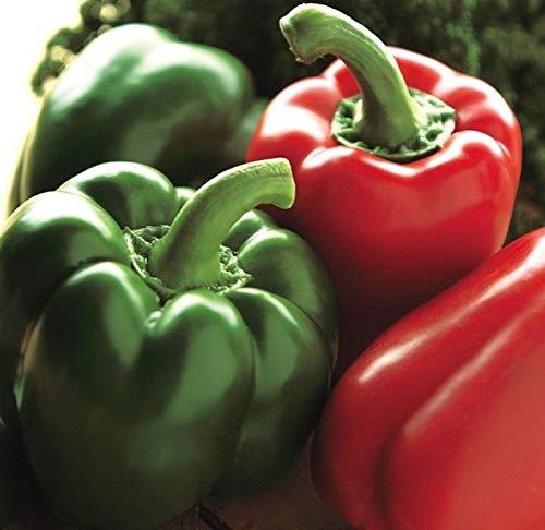 California Wonder Pepper Seed - Heirloom Sweet Bell Peppers Seeds 0.25 gr