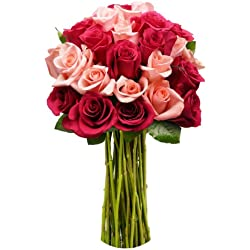 Benchmark Bouquets 2 Dozen Blushing Beauty Roses, No Vase for Valentine's Day