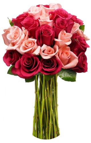 benchmark-bouquets-2-dozen-blushing-beauty-roses-no-vase