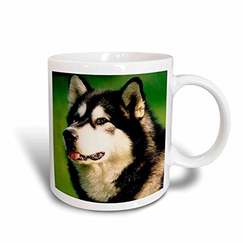 3dRose Alaska Malamute Dog Mug, 11-Ounce
