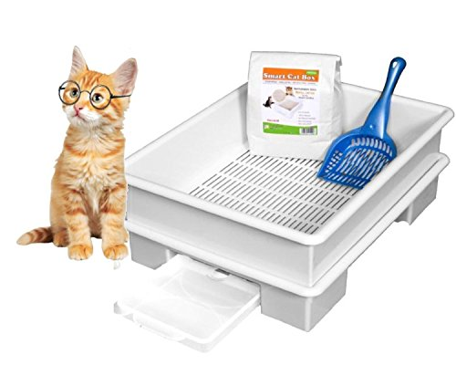 with Litter Boxes with Lids design