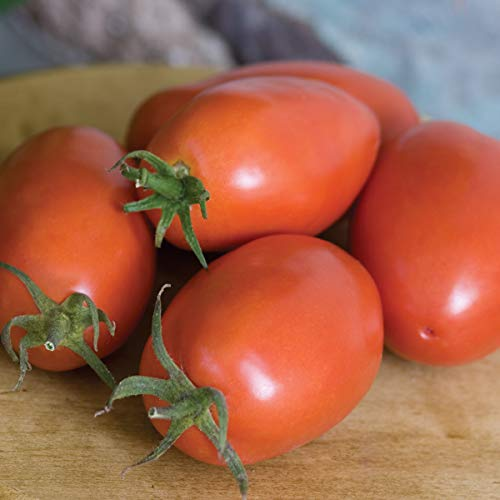 Burpee 'Amish Paste' Organic | Heirloom Red Paste Tomato | 25 Seeds
