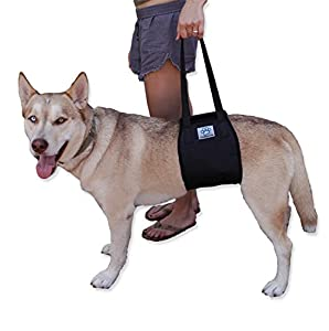 XL Dog Lift Support Rehabilitation Harness for canines aid - X-Large Assist Sling to help with mobility. Lifting Older K9 & Young Puppies with handle for Weak hind legs & Joints surgery