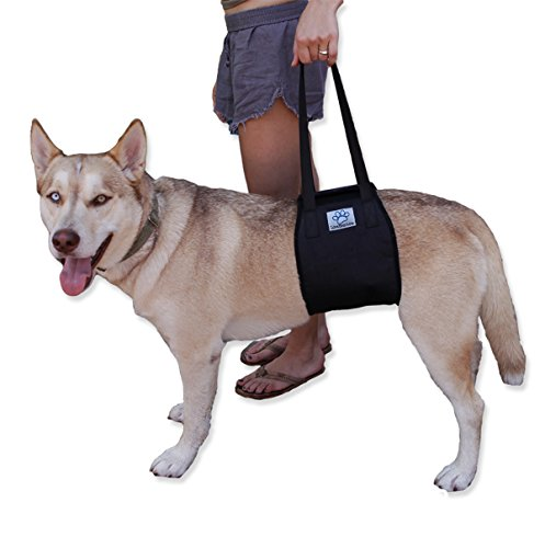 (Dog Lift Support Rehabilitation Harness for canines aid - Medium and Large Assist Sling to help with mobility. Lifting Older K9 & Young Puppies with handle for Weak hind legs & Joints surgery.)