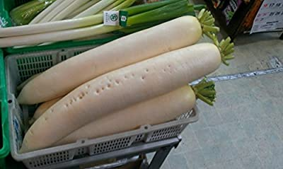 """3g (Approx. 300 - 360) Giant Daikon Radish Seeds """"Minowase/ Summer Cross"""" Very Low in Food Energy, Extremely Dietary Vegetable, Heirloom. 'Fresh Seeds - Best Before 12.2018!'"""