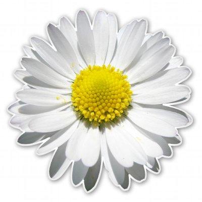 daisy-flower-vinyl-sticker-car-phone-helmet-select-size