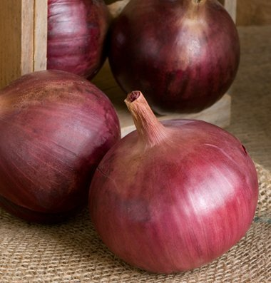 David's Garden Seeds Onion Cabernet Intermediate D2581 (Red) 500 Organic Hybrid Seeds