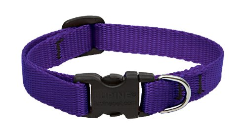 "LupinePet Basics 1/2"" Purple 8-12"" Adjustable Collar for Small Dogs"