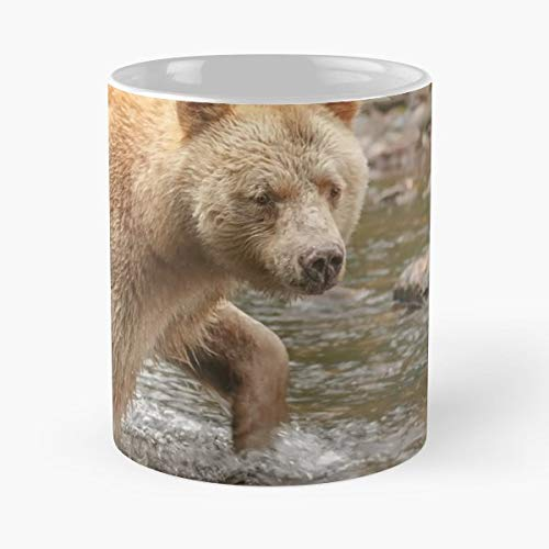 (Canada British Columbia Great Bear Rainforest Gribbell Island - Best Gift Ceramic Coffee Mugs 11 Oz)