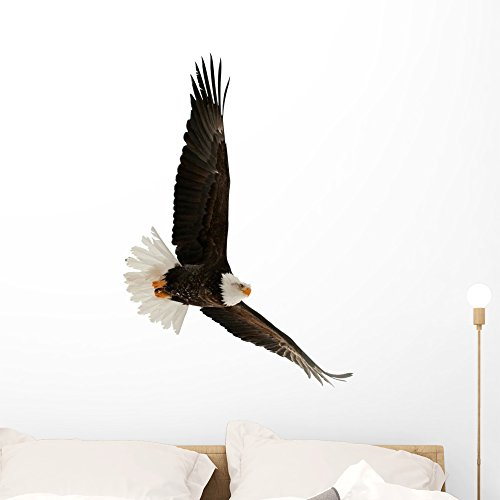 Wallmonkeys WM152042 The Bald Eagle Haliaeetus Leucocephalus Peel and Stick Wall Decals (36 in H x 34 in W), Large