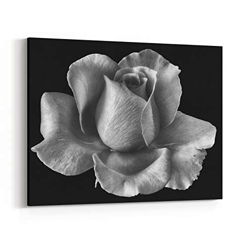 Rosenberry Rooms Canvas Wall Art Prints - Bright Monochrome Fine Art Still Life Floral Macro Flower Image of A Single Isolated White Flowering Blooming Rose Blossom On Black (14 x 11 inches)